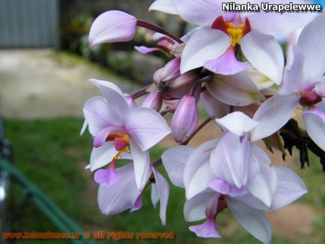 nilanka-urapelewwe-blog-voyage-telunfusee-gampaha-05-srilanka-travel-blog