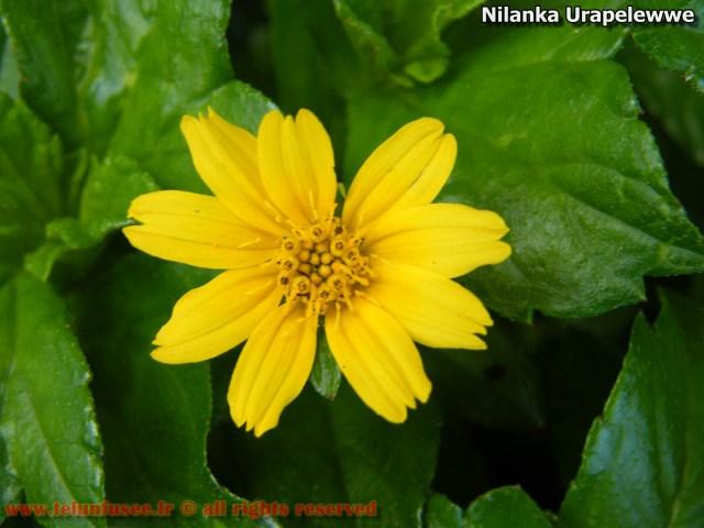 nilanka-urapelewwe-blog-voyage-telunfusee-gampaha-107-srilanka-travel-blog