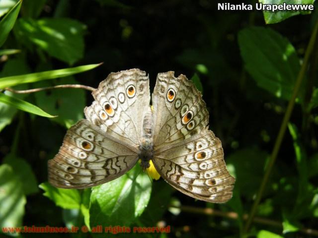 nilanka-urapelewwe-blog-voyage-telunfusee-gampaha-colombo-02-srilanka-travel-blog