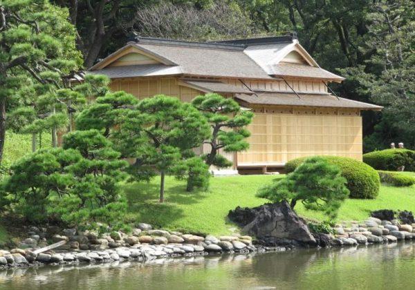 Cara Paling Sederhana untuk Menanam Rumput Jepang di Rumah