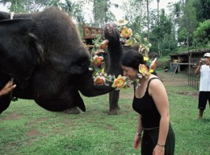 gajah bali