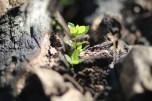 Tunas yang tumbuh (dok. temansetaman)