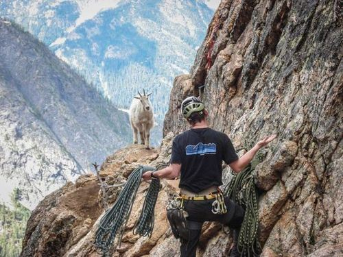 the-world_s-top-10-best-images-of-climbing-goats-7