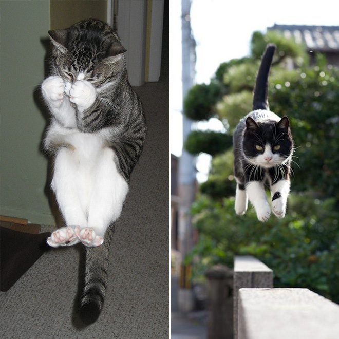 flying-cat11