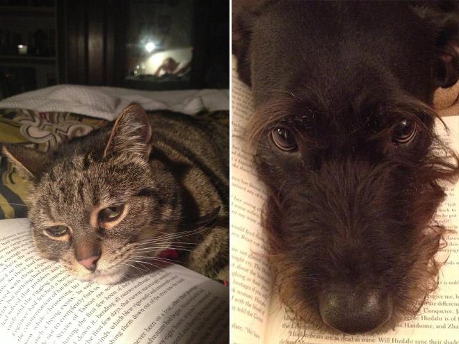 reading-pets12