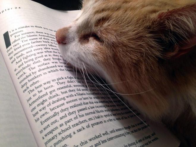 reading-pets16