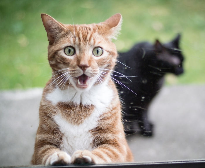 surprised-shocked-animals-funny-10__700