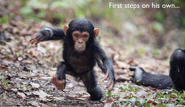 画像 動物たちのとっても様々な初体験の様子がとってもチャーミングなのだ