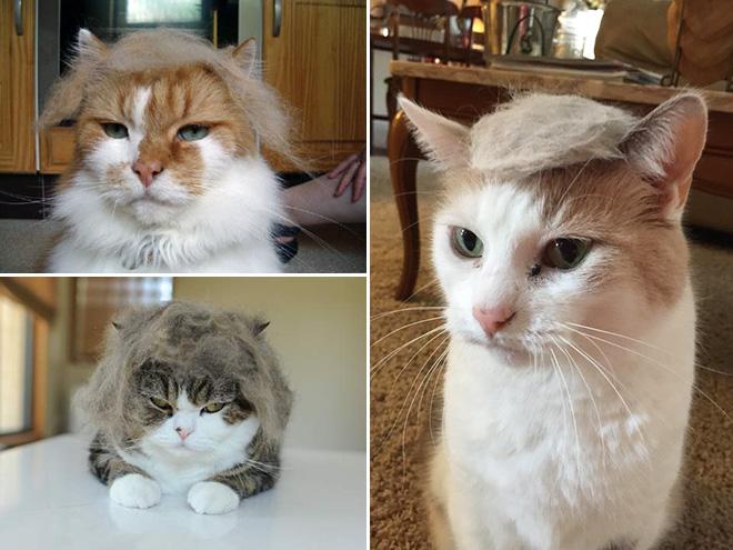 trump-cat3