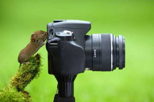 animals-photographers-12