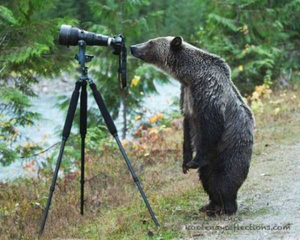 animals-photographers-14