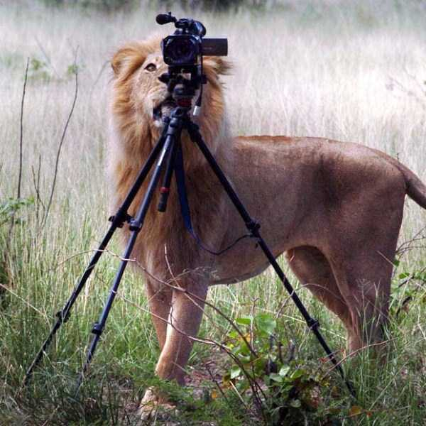 animals-photographers-29