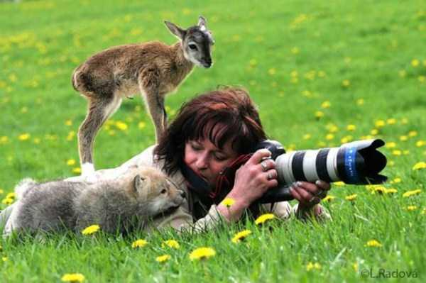animals-photographers-3