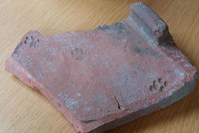 2000年前の猫の足跡が古代ローマ時代の遺跡から発見される
