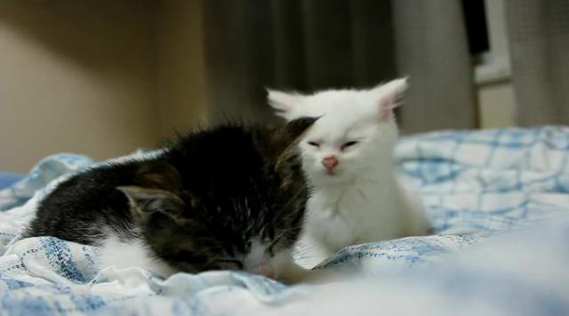 睡魔に負けないように頑張る仔猫05