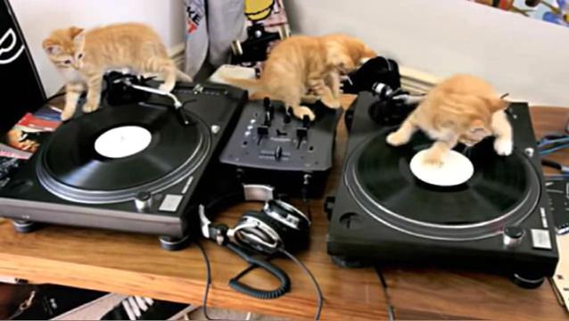 01-DJ 仔猫が奏でるキュンキュンビートに心躍る