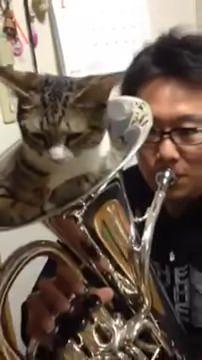 01-「おしりがムズムズするにゃ」猫が金管楽器の中で寝ているけどちょっと吹いてみた