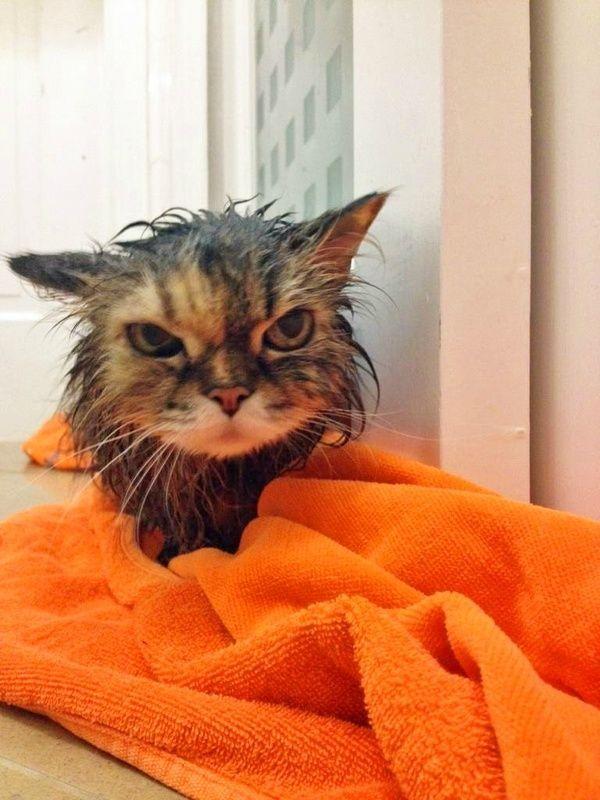 08-お風呂が嫌いな猫の不機嫌な写真15枚