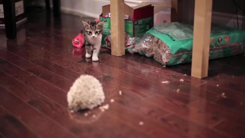 03-子ネコさんとハリネズミ。まだちょっとお互いが怖いけど友だちになれるかな?