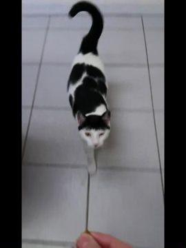 02-前髪切りすぎた!みたいな柄の猫が面白可愛い(ΦωΦ)