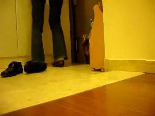 この動画を見ると出掛けられなくなる・・・さみしがり屋のネコさんのお留守番の様子