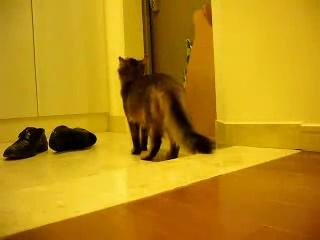早く帰らなきゃ。 甘えん坊の猫のお留守番中の様子04