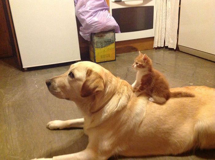 ずっと友だち! 猫と犬のすてきな関係!24