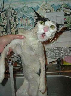 05-お風呂が嫌いな猫の不機嫌な写真15枚