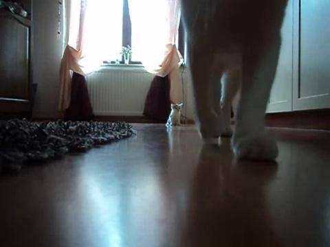 01-お母さんどこぉ? 母猫がちょっとどこかに行って寂しそうな仔猫