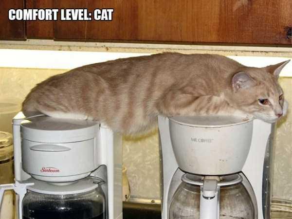 funny-cat-logic-1
