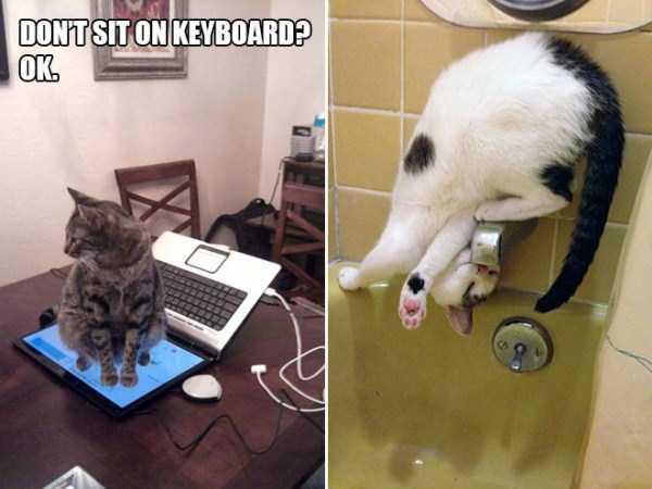 funny-cat-logic-13