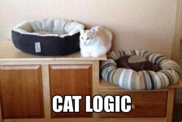 funny-cat-logic-22