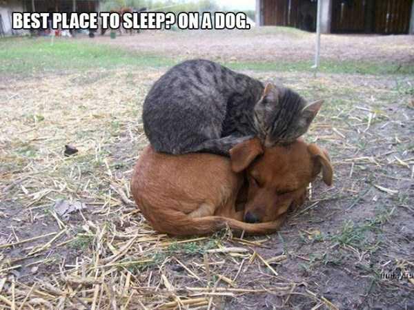 funny-cat-logic-6