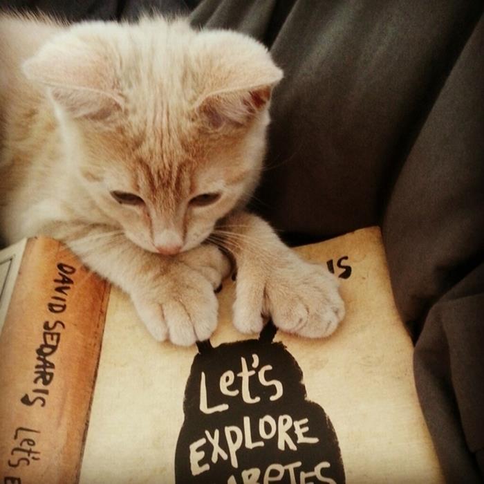 07-本好きのみなさんへ。読書が好きな猫たちはいかが?