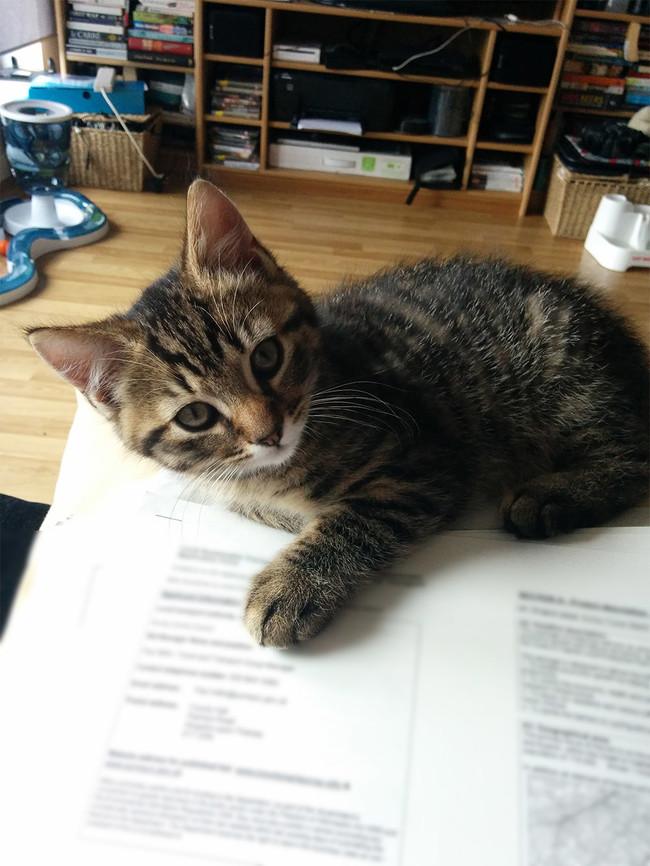 11-自宅で仕事する際の最大の敵はこいつです。アピールし過ぎな16匹の猫たち。
