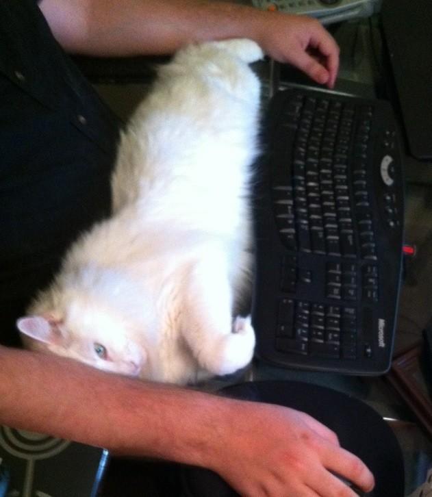 01-自宅で仕事する際の最大の敵はこいつです。アピールし過ぎな16匹の猫たち。.0