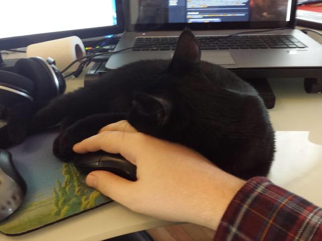 05-自宅で仕事する際の最大の敵はこいつです。アピールし過ぎな16匹の猫たち。
