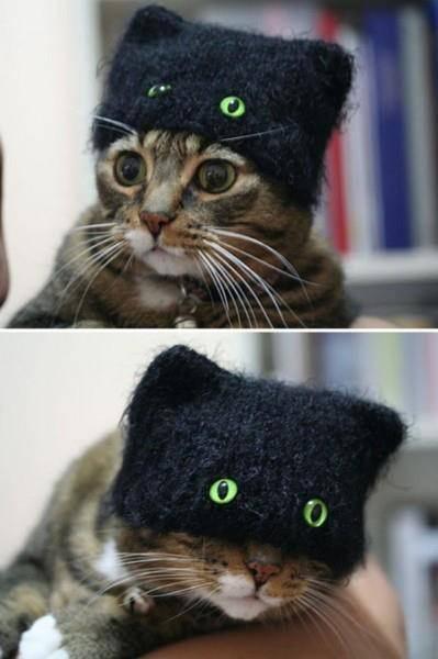 022-帽子をかぶったお洒落な猫たち。どの子が1番かわいい?