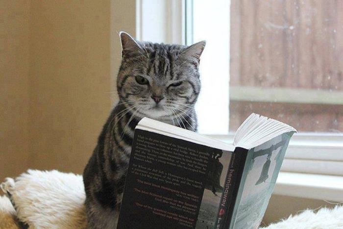 03-本好きのみなさんへ。読書が好きな猫たちはいかが?