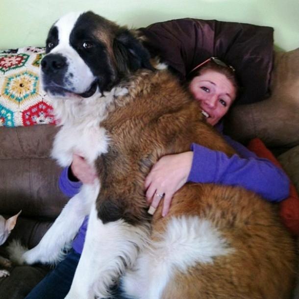 4-large-dog-006-610x610