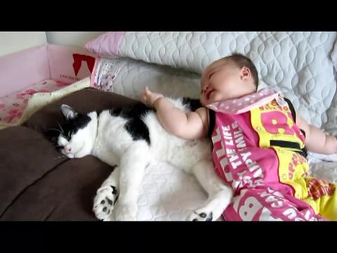 01-二人は仲良し!赤ちゃんにちょっかいだされるけど、ずっと寄り添ってあげる猫