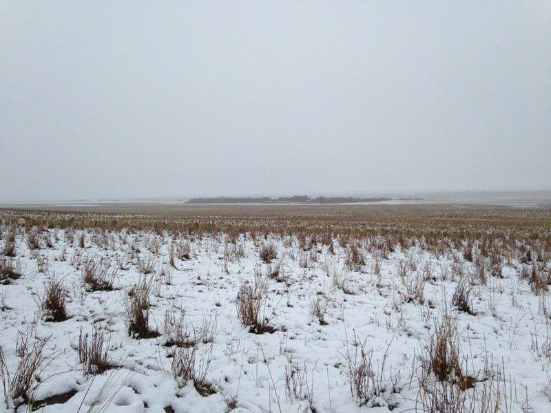 500-sheep-in-this-photo-liezel-kennedy-pilgrim-farms-2