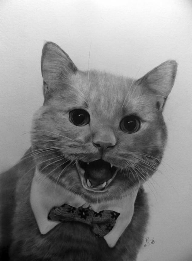 12-この16枚のネコ画像にはある秘密があります。ネコ好きのみなさんなら分かりますよね!