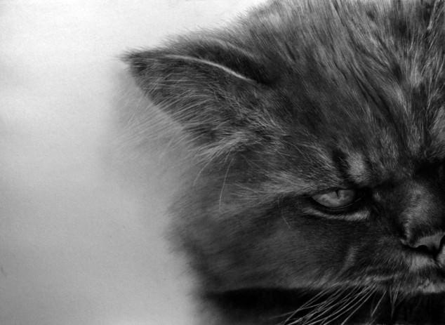 13-この16枚のネコ画像にはある秘密があります。ネコ好きのみなさんなら分かりますよね!