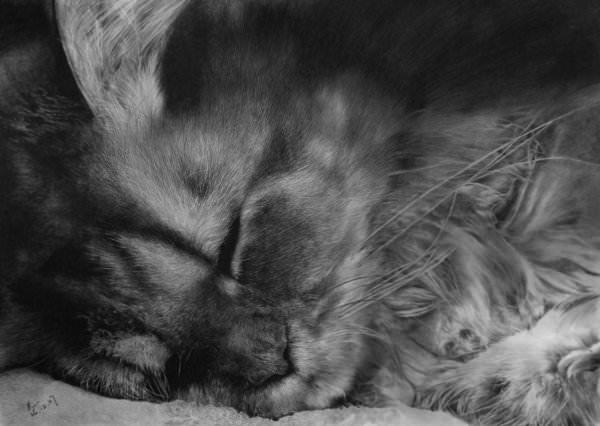 09-この16枚のネコ画像にはある秘密があります。ネコ好きのみなさんなら分かりますよね!