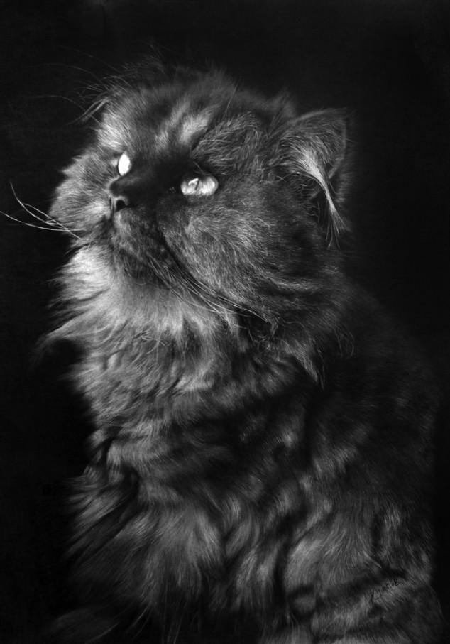 10-この16枚のネコ画像にはある秘密があります。ネコ好きのみなさんなら分かりますよね!