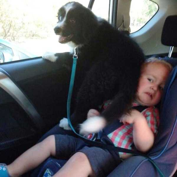 dogs-acting-like-jerks-11