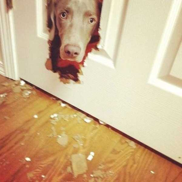 dogs-acting-like-jerks-19