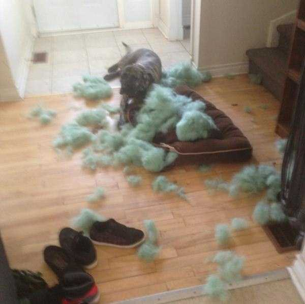 dogs-acting-like-jerks-4