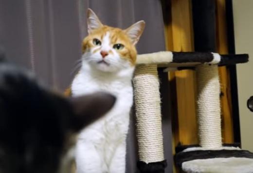 お尻くちゃい猫   It Stinks      YouTube